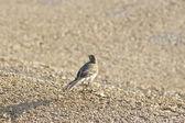 Photo small bird on ground