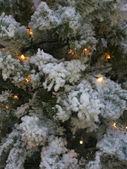 Fényképek karácsonyfa ága