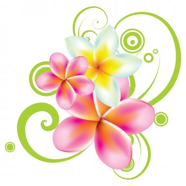 vector illustration of tropical flowers