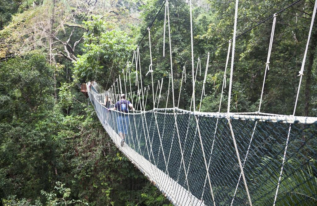 Canopy walkway. Taman Negara National Park. Malaysia u2014 Photo by lusia83 & Canopy walkway. Taman Negara National Park. Malaysia u2014 Stock Photo ...
