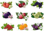 Photo Set of ripe fruits