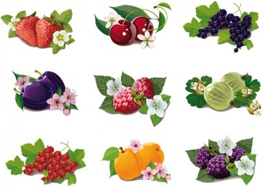 Set of ripe fruits with flowers and leaves stock vector