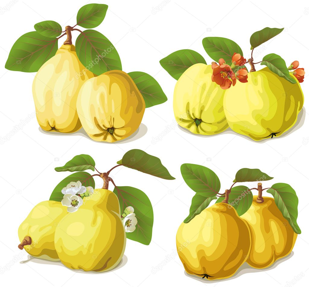 set of ripe quinces