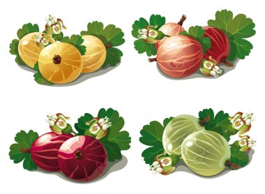 set of ripe gooseberries