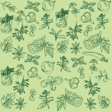 Seamless background with herbs