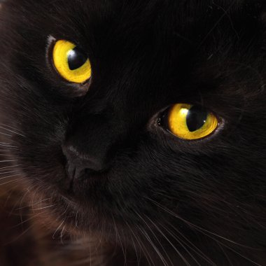 Black cat looking to you with bright yellow eyes