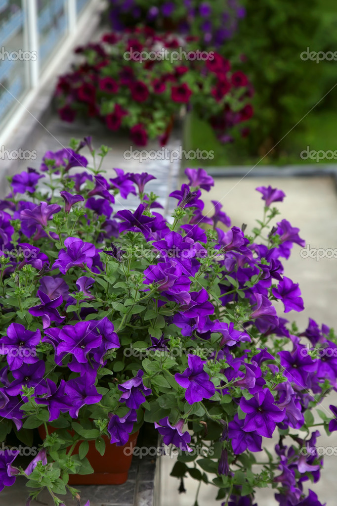 Flores Decoradas Terraza De Una Casa Fotos De Stock