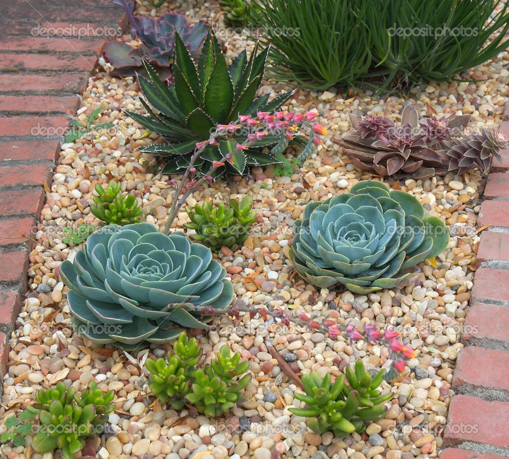 Giardino di piante grasse foto stock sarah jane 50965331 for Piante grasse ornamentali