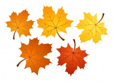 Autumn maple leaves of various colors. Vector illustration.