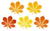 Five autumn chestnut leaves. Vector illustration.