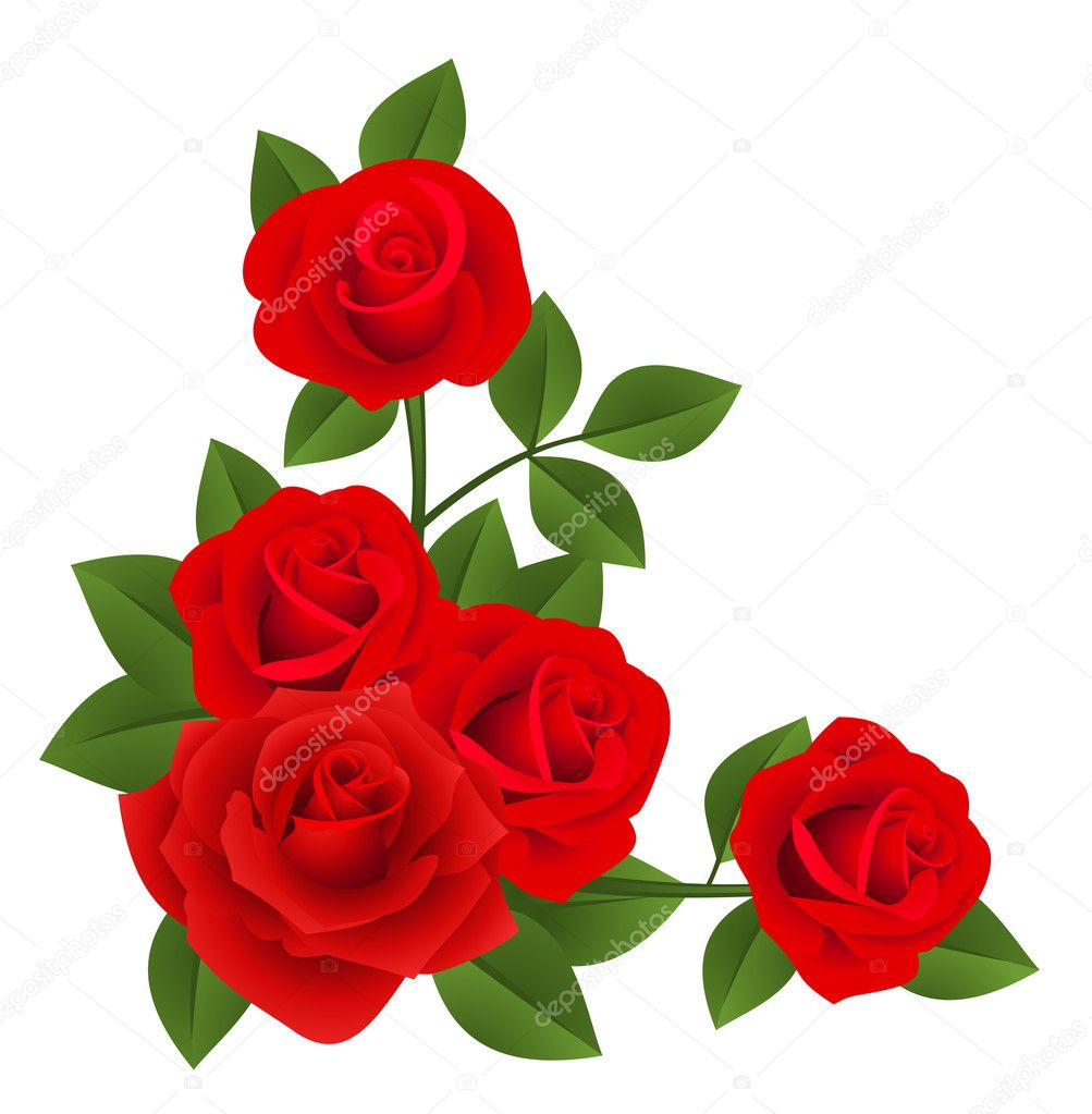 Red roses. Vector illustration.