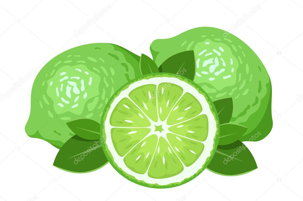 Three limes isolated on white. Vector illustration.