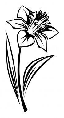 Black silhouette of narcissus flower. Vector illustration.