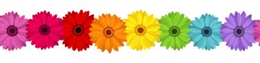 Horizontal seamless background with colored gerbera. Vector illustration.