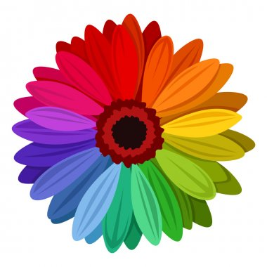 Gerbera flowers with multicolored petals. Vector illustration.