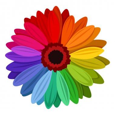 Gerbera flowers with multicolored petals. Vector illustration.