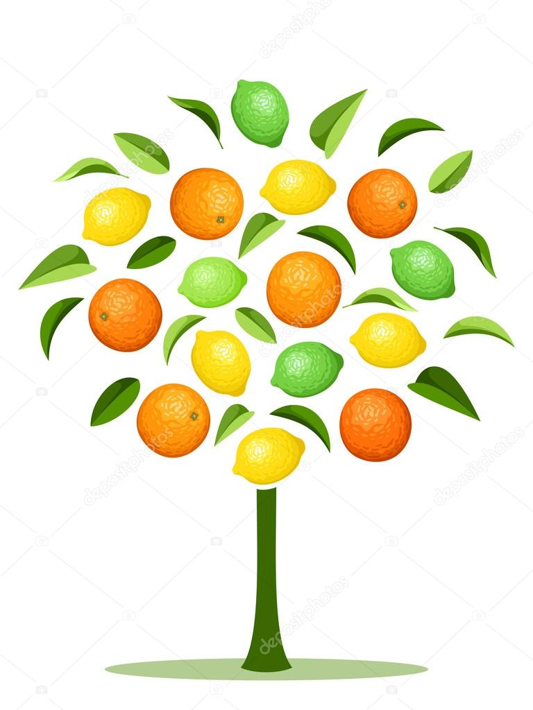 Abstract tree with various citrus fruits. Vector illustration.