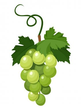 Bunch of green grapes. Vector illustration.