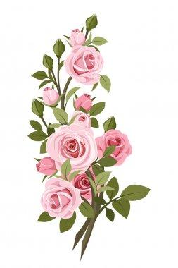 Vintage pink roses branch. Vector illustration.