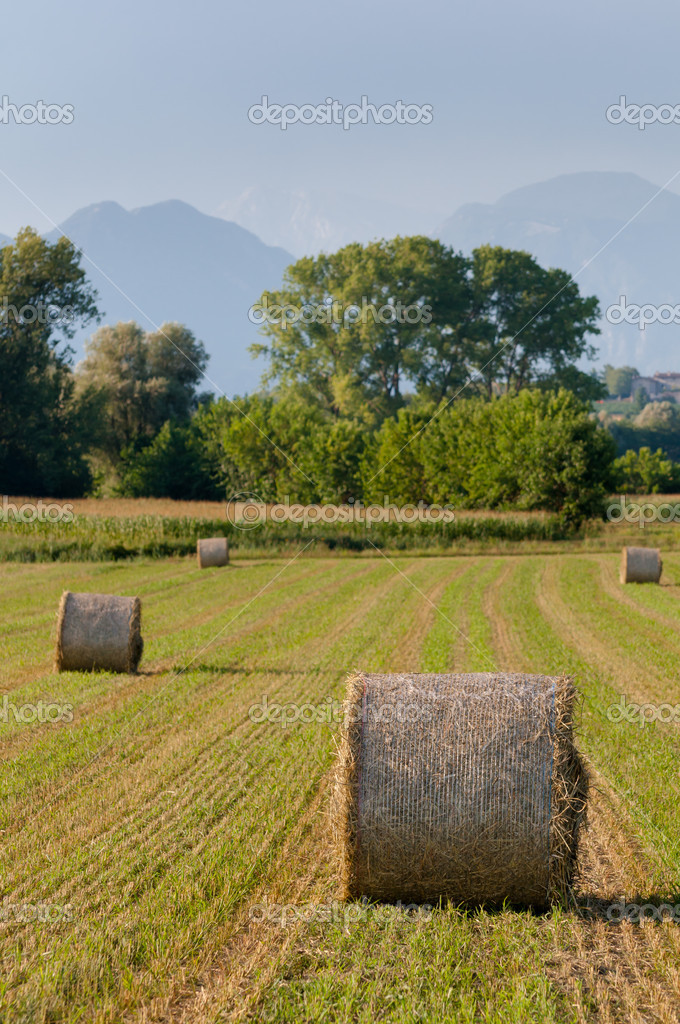 Hay Rolls And Mountains Background Stock Photo