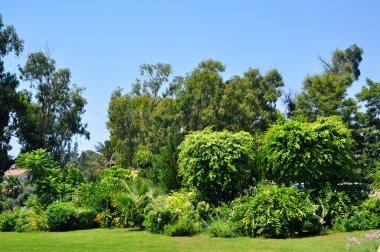 Hotel`s tropical garden, Cyprus