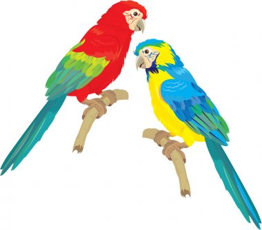 Blue Yellow and Red Blue Macaw parrots isolated on white backgro