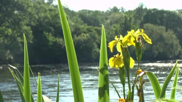 květiny na pobřeží řeky