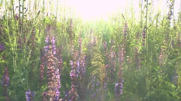 krásné květiny louka pole proti modrá obloha a slunce s větrem