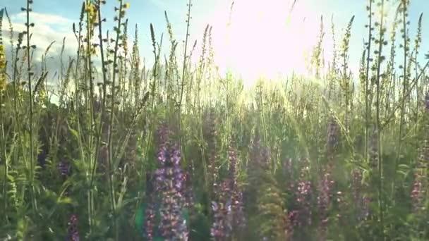 krásné květiny louka pole proti modré obloze