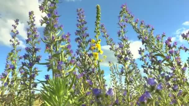 Beautiful flowers meadow field against blue sky