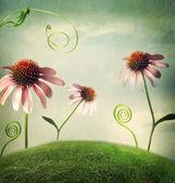 Fényképek Echinacea virágok fantasy tájkép