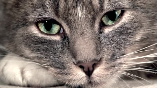 egy macska közelsége