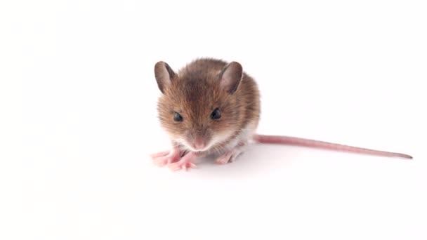 Kleine Maus
