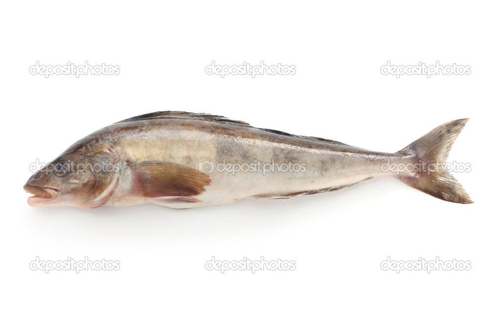 Arabesque greenling, okhotsk atka mackerel, hokke