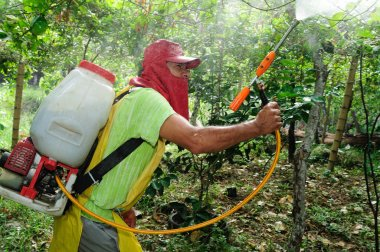Maracuya plantation fumigating