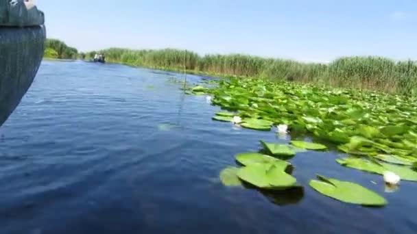 vodní kanál plný s lekníny v biosféře delta Dunaje rezerva, Rumunsko