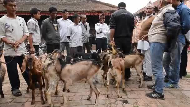 zvířata na prodej za oběť