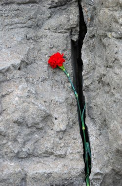 A red carnation flower sticking out of a cracked wall.