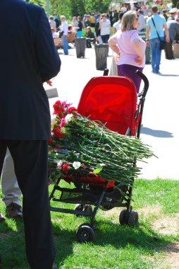 Many carnation flowers.