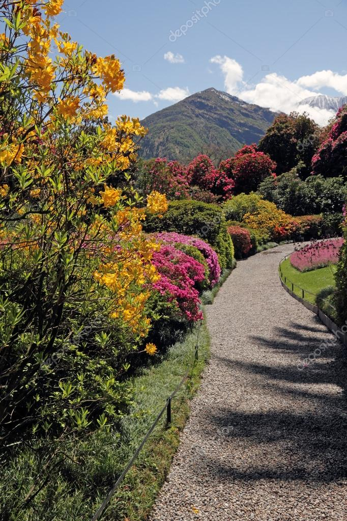 Fantastic landscape with azaleas and rhododendrons