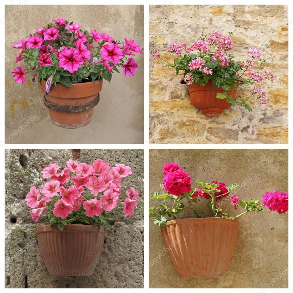 Poster con fiori viola in vasi di terracotta sulla parete for Vasi in terracotta on line