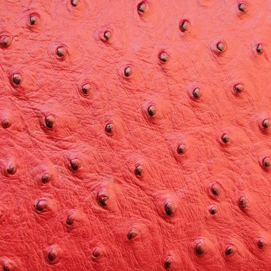 Red ostrich leather texture