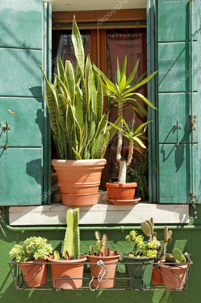outdoor sunny window decorated with many plants in pots, Burano,