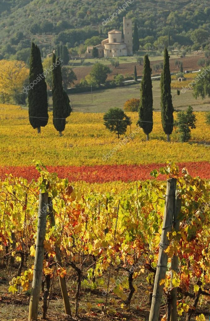 fantastic landscape of tuscan vineyards in autumn, at horizon St