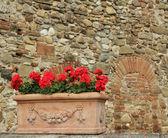 červené pelargónie květy v elegantní dóza