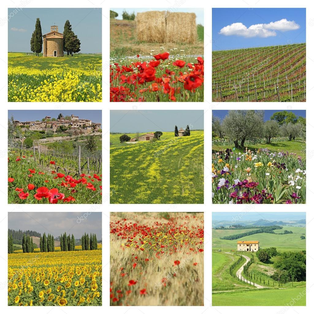 Flowering tuscan fields