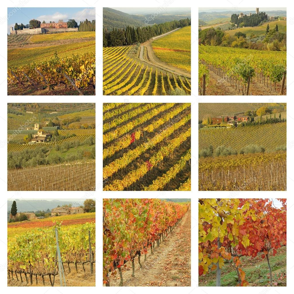 Vineyards in autumnal colors