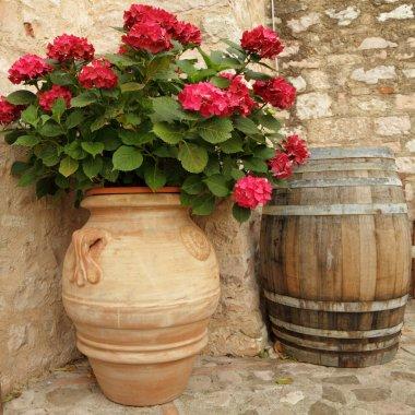 Flowering hortensia in ceramic vase