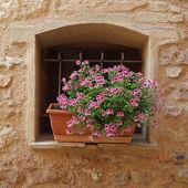 többszínű lobelia virágok ablak