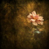 Photo Painterly Peach Rose Background